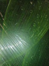 Transzparens papír - Levélen vízcsepp