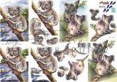 Koala, Fázisos 3D