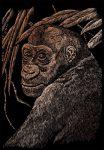Kreatív hobby - Csimpánz