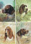 Kutya portrék, 3D készlet