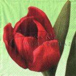 Tulipán zöld háttérrel, Szalvéta
