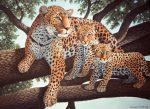 Kreatív hobby - Afrikai leopard