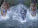 Kreatív hobby - Három tigris