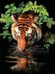Kreatív hobby - Akril kifestő számokkal - Szomjas tigris