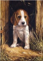 Kifestő készlet számokkal, ecsettel, gyerekeknek 8 éves kortól - 20x25 cm - Beagle kölyök