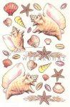 Kagylók, áttetsző dec.transz