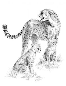 Rajztanítás - Gepárd