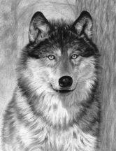 Rajztanítás - Farkas
