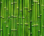 Kartonpapír - Bambusz mintás karton, 1 lap